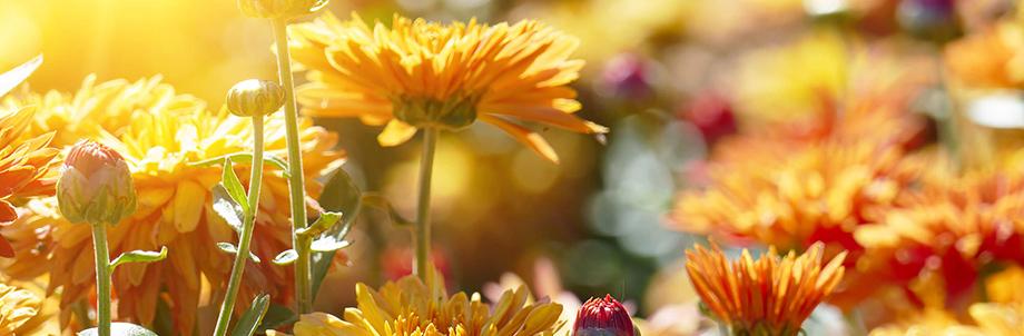 Family-Run Plant Nursery Enjoys a Blooming Wellness Program